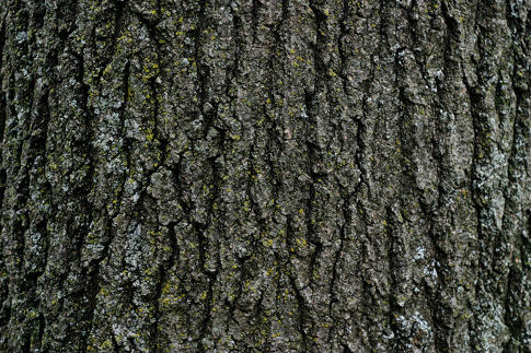 Free Texture Tuesday: Tree Bark
