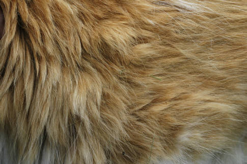 Free Texture Tuesday: Fur