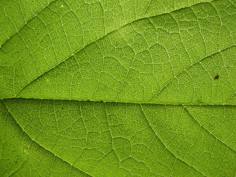 Free Texture Tuesday: Leaves
