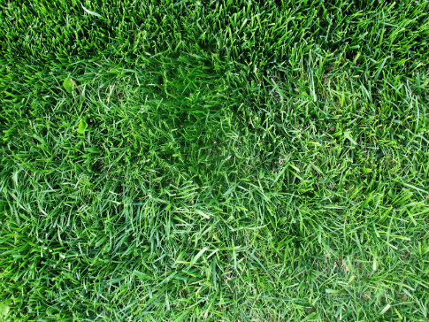 Free Texture Tuesday: Grass