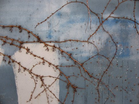 Free Texture Tuesday: Vines