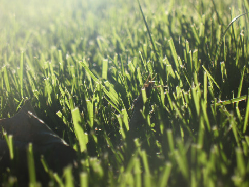 Free Texture Tuesday: Grass 2