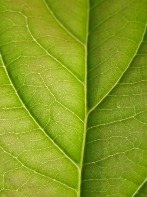 Free Texture Tuesday: Leaves 2