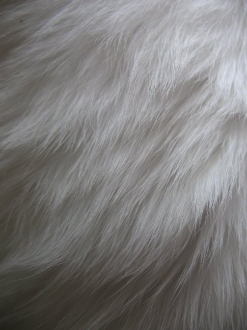 Free Texture Tuesday: Fur 2