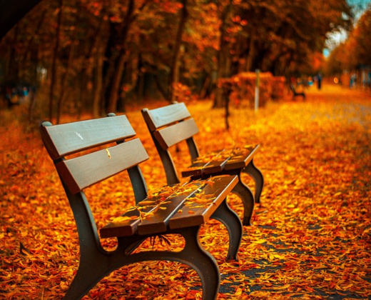 autumn leaves bench photo sample