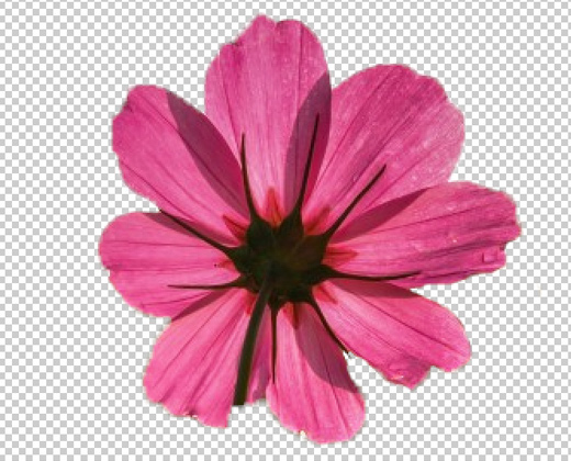 Render Quick Mask Flower Transparent Howto