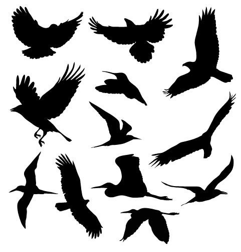 BB Free Vectors: Birds in Flight