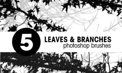 Branch Brushes Promo