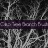 BB-Branches-Promo