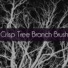 BB-Branches-Promo
