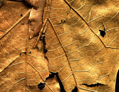 BB Dried Leaves 02