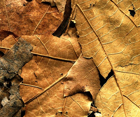 BB Dried Leaves 03