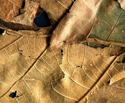 BB Dried Leaves 05